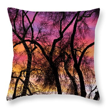 Colorful Silhouetted Trees 27 Throw Pillow by James BO  Insogna