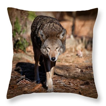 Coming Right At You Throw Pillow by Karol Livote