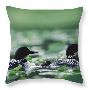 Common Loon Gavia Immer Mated Couple Throw Pillow by Michael Quinton