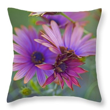 Copper Daisies 1 Throw Pillow by Bonnie Bruno