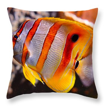 Copperband Butterfly Fish Throw Pillow by Pravine Chester