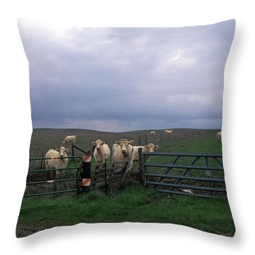 Cow Convergence Throw Pillow by Kathy Yates