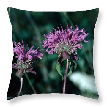 Coyote Mint Throw Pillow by Robert Ashworth