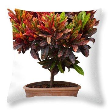 Croton Tree In Flowerpot Throw Pillow by Atiketta Sangasaeng