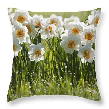 Daffodils In The Dew Covered Grass Throw Pillow by Susan Dykstra