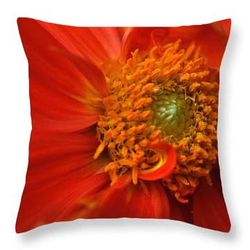 Dahlia Persuasion Throw Pillow by Kathy Yates