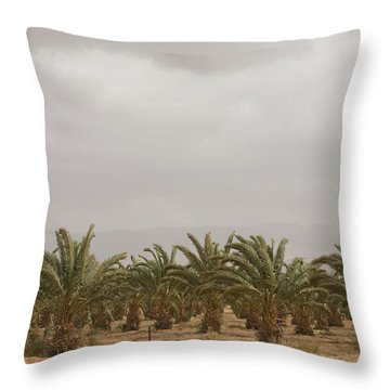 Date Palm Trees In An Orchard Throw Pillow by Taylor S. Kennedy