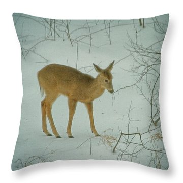 Deer Winter Throw Pillow by Karol Livote
