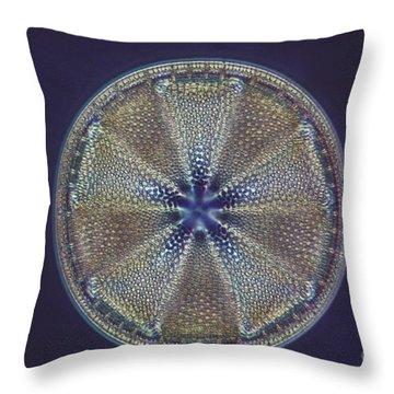 Diatom - Actinoptychus Heliopelta Throw Pillow by Eric V. Grave