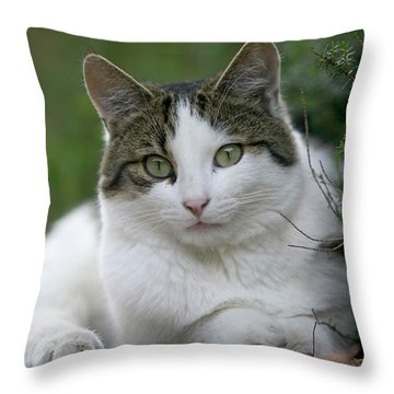 Domestic Cat Felis Catus Portrait Throw Pillow by Cyril Ruoso