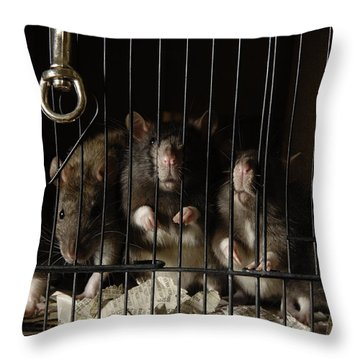 Domestic Rats At The George M. Sutton Throw Pillow by Joel Sartore