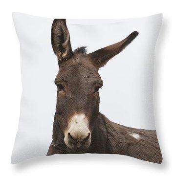 Donkey At The Hajigak Pass, Vardak Throw Pillow by Peter Langer