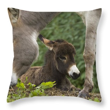 Donkey Equus Asinus Adult With Foal Throw Pillow by Konrad Wothe
