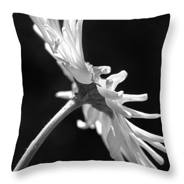 Dramatic Daisy Flower Black And White Throw Pillow by Jennie Marie Schell