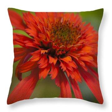 Dreamy Hot Papaya Coneflower Bloom Throw Pillow by Teresa Mucha