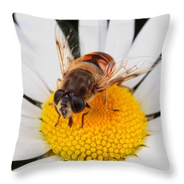 Drone Fly, Earistalis Throw Pillow by George Grall