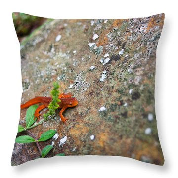 Eastern Newt Juvenile 8 Throw Pillow by Douglas Barnett