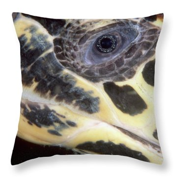 Extreme Close-up Of The Head Throw Pillow by Beverly Factor