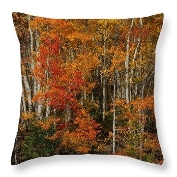 Fall Colors Grand Mesa Throw Pillow by Ernie Echols