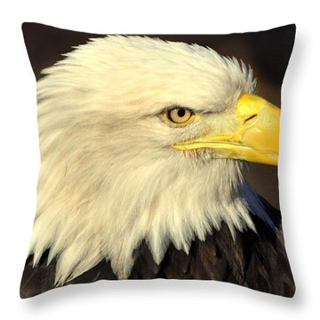 Fall Eagle 1 Throw Pillow by Marty Koch