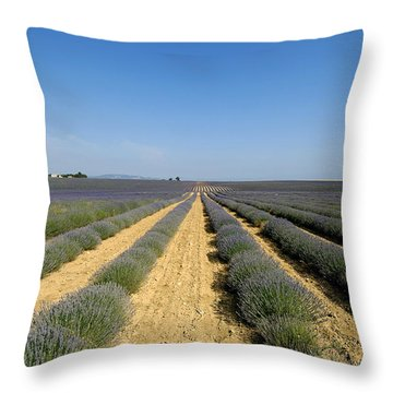 Field Of Lavender. Valensole Throw Pillow by Bernard Jaubert