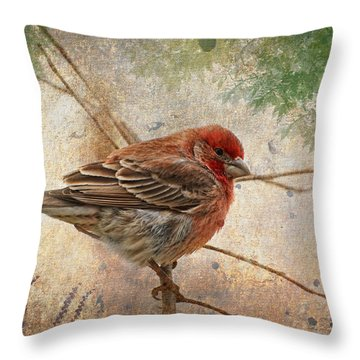 Finch Art Or Greeting Card Blank Throw Pillow by Debbie Portwood