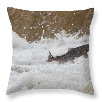 Fish Jumping Upstream In The Water Throw Pillow by John Short