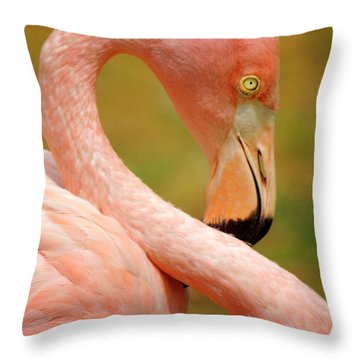 Flamingo Throw Pillow by Carlos Caetano