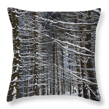 Forest Of Marburg In Winter Throw Pillow by Axiom Photographic