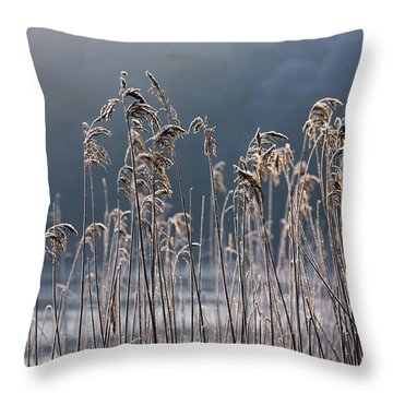 Frozen Reeds At The Shore Of A Lake Throw Pillow by John Short