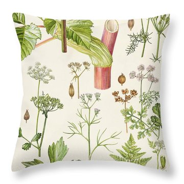 Garden Angelica And Other Plants  Throw Pillow by Elizabeth Rice