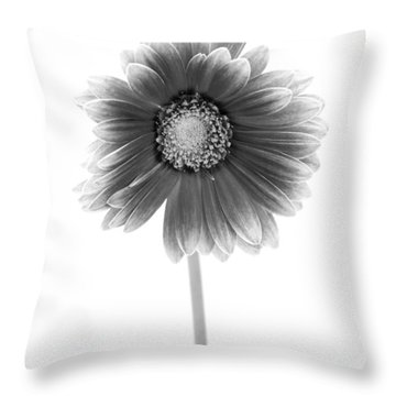 Gerbera In Black And White Throw Pillow by Sebastian Musial