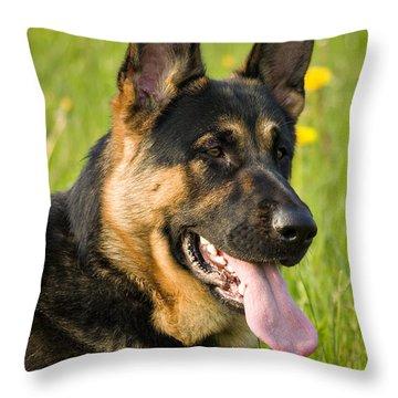 German Shepherd Throw Pillow by Meirion Matthias