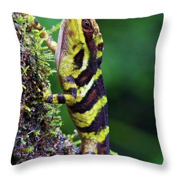 Giant Anole Dactyloa Microtus Male Throw Pillow by James Christensen
