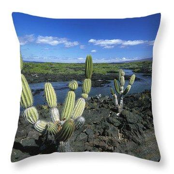 Giant Candelabra Cactus Jasminocereus Throw Pillow by Winfried Wisniewski