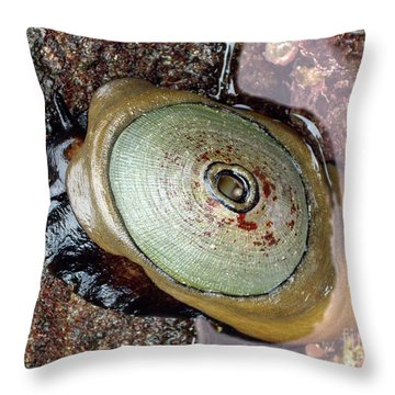 Giant Keyhole Limpet Throw Pillow by Mariola Bitner
