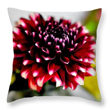 Glowing Dahlia Throw Pillow by Pravine Chester