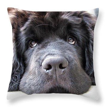 Glum Throw Pillow by Gary Yates