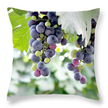 Grapes On The Vine Throw Pillow by Glennis Siverson
