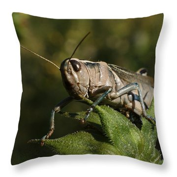 Grasshopper 2 Throw Pillow by Ernie Echols
