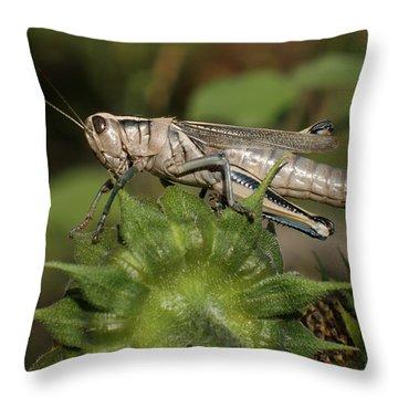 Grasshopper Throw Pillow by Ernie Echols