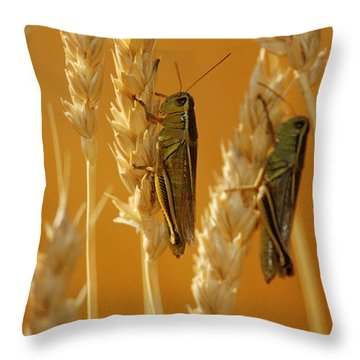 Grasshoppers On Wheat, Treherne Throw Pillow by Mike Grandmailson