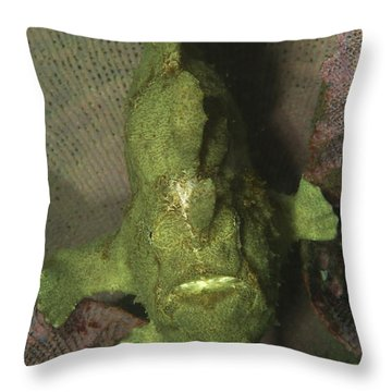 Green Frogfish In Sponge, North Throw Pillow by Mathieu Meur