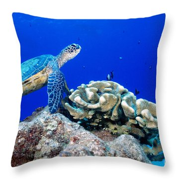 Green Sea Turtle Throw Pillow by Andrew G Wood and Photo Researchers
