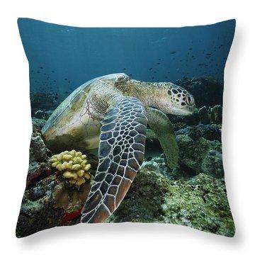 Green Sea Turtle Chelonia Mydas Throw Pillow by Hiroya Minakuchi