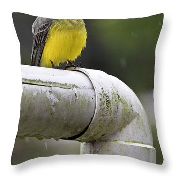 Grey-capped Flycatcher Throw Pillow by Heiko Koehrer-Wagner
