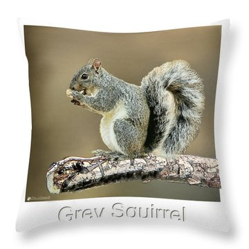 Grey Squirrel Throw Pillow by Tom Schmidt