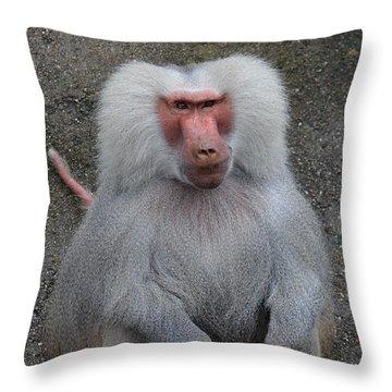 Hamadryas Baboon Throw Pillow by Eva Kaufman