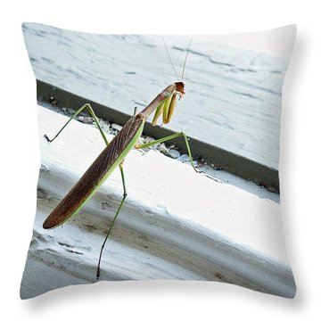 Heading Out Throw Pillow by Lisa Phillips