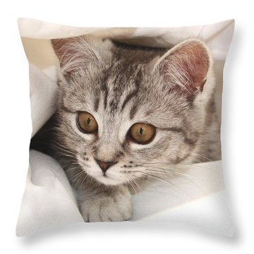 Hello Kitten Throw Pillow by Claudia Moeckel